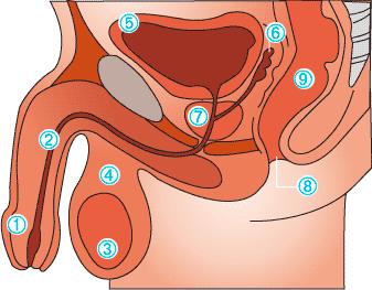 Gomeopátia prosztatitis kezelése